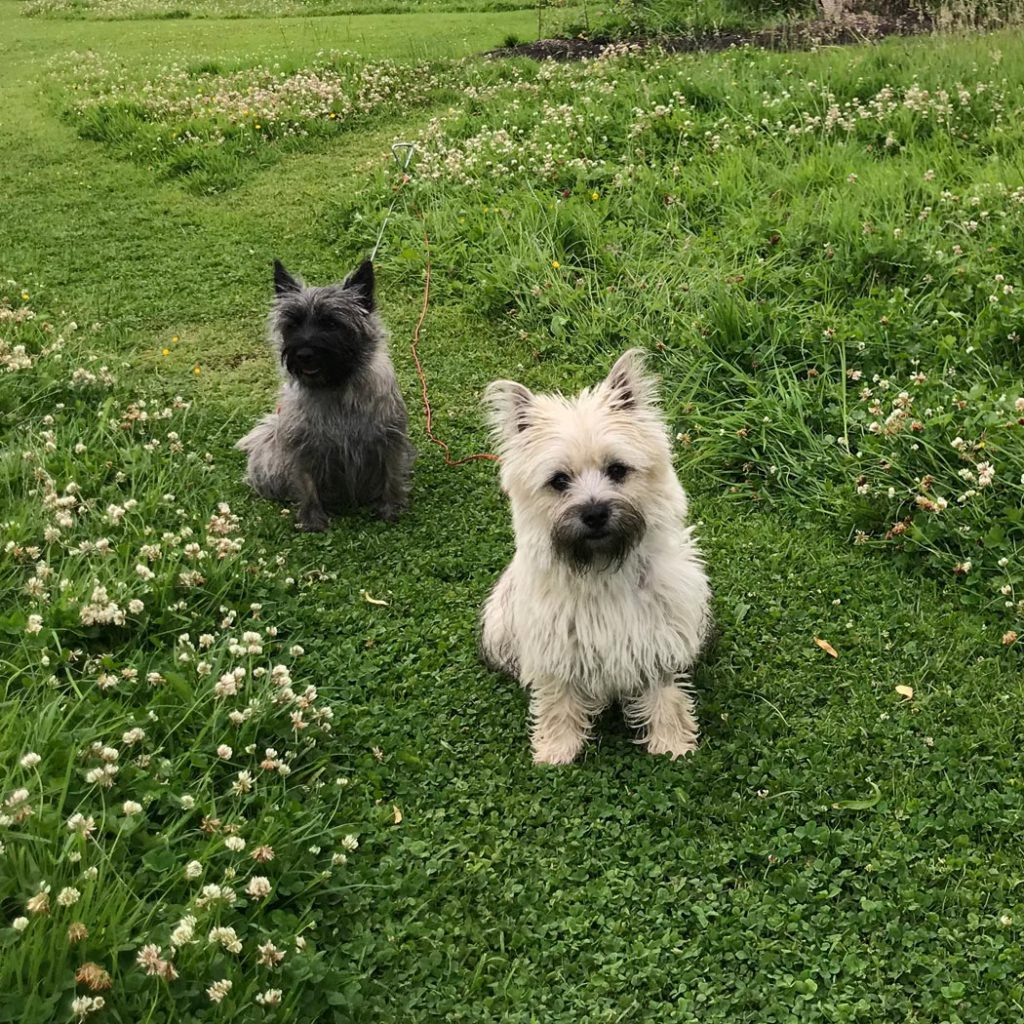 Dogs at Newchester Farmhouse